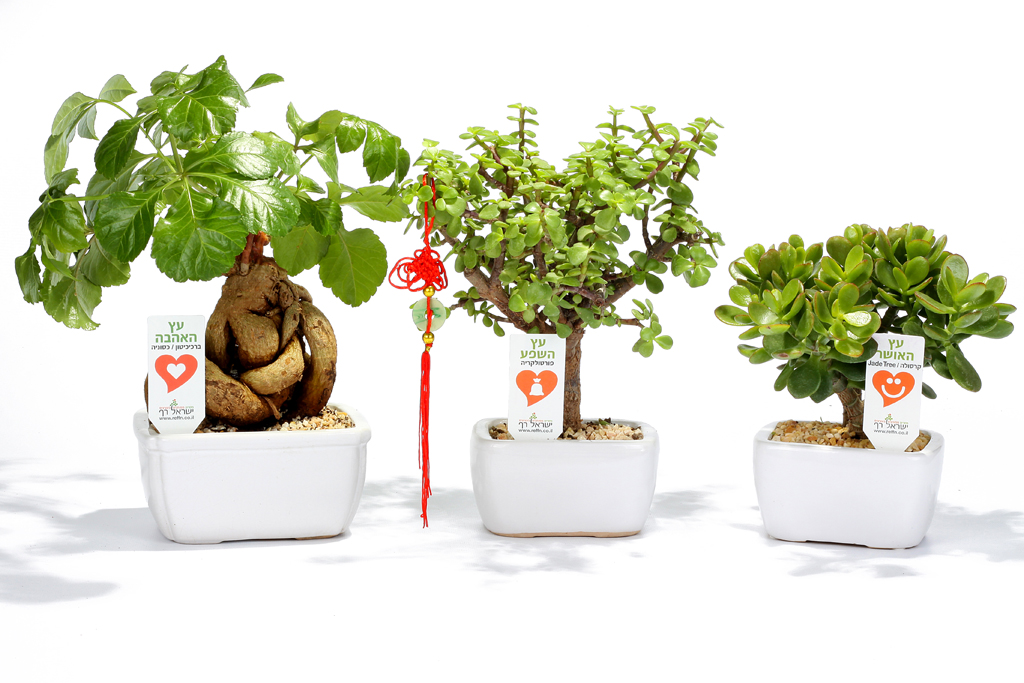מבחר עציצים עם מיתוג לטו בשבט